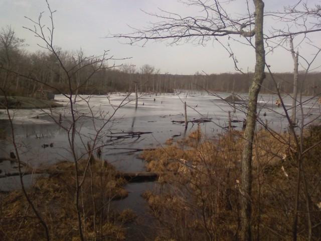 Frozen River - Beaver Dam